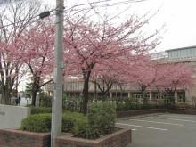 河津桜 iコントラスト