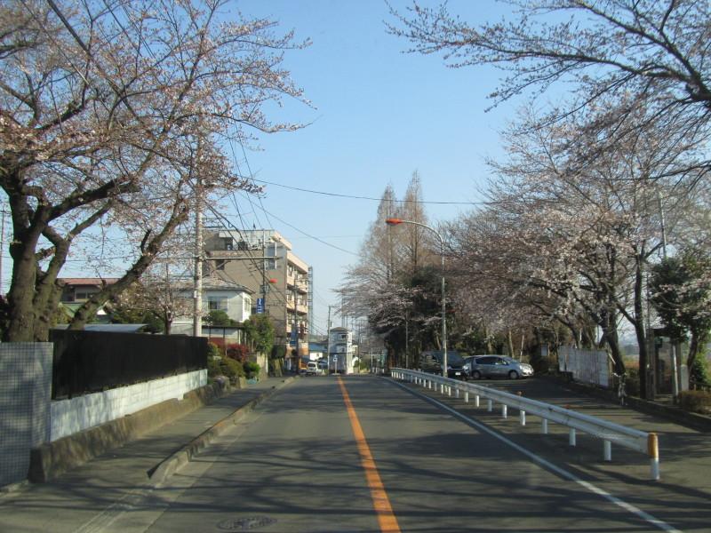 八景の棚 桜