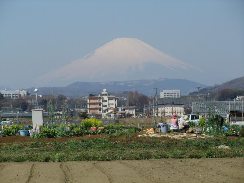 ⇒富士山 畑 婆さん