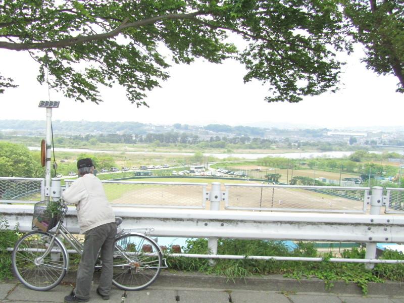 新緑 相模川