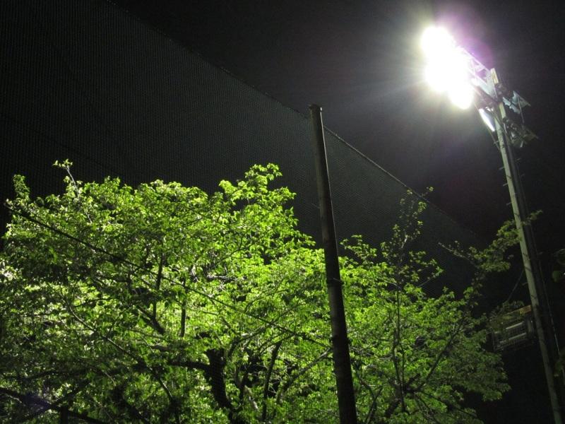 新緑ライトアップ画像