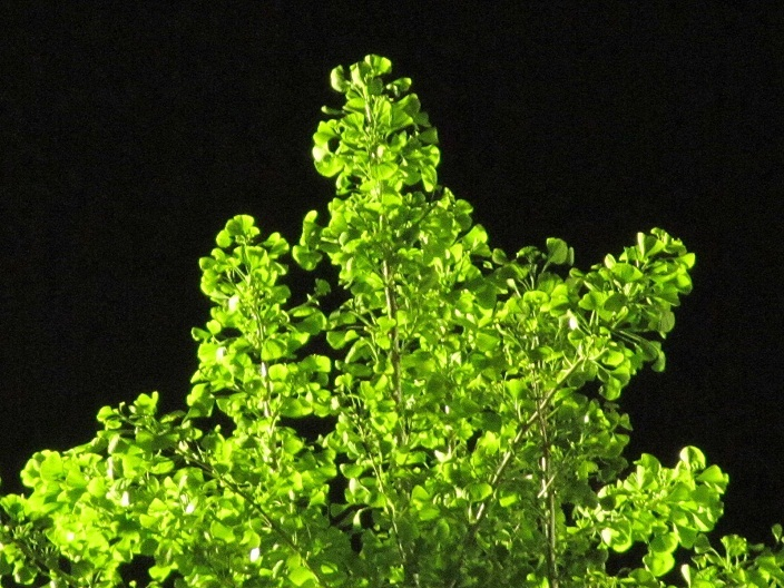 新緑 ライトアップ