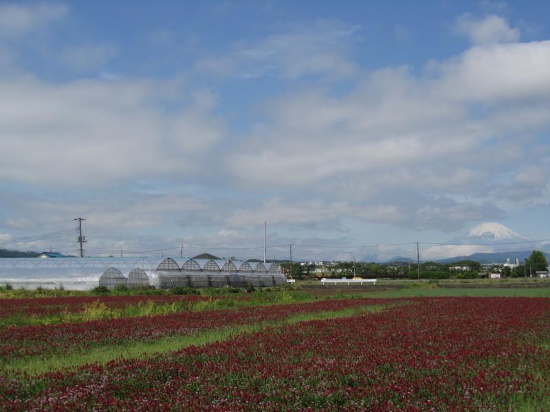 富士山 ストロベリーキャンドル