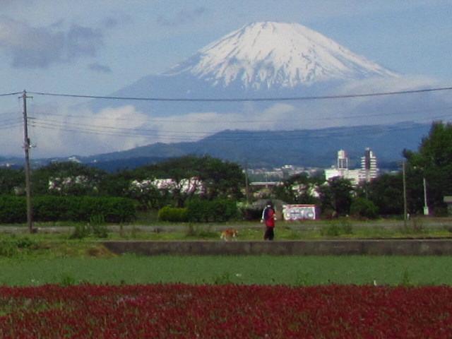 富士山 犬