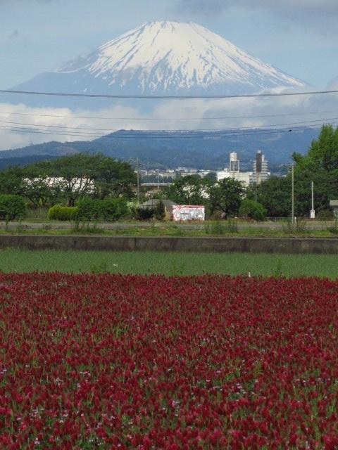 $⇒富士山 ストロベリー・キャンドル