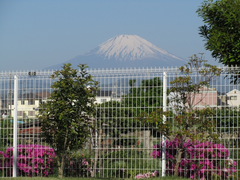 富士山 ツツジ