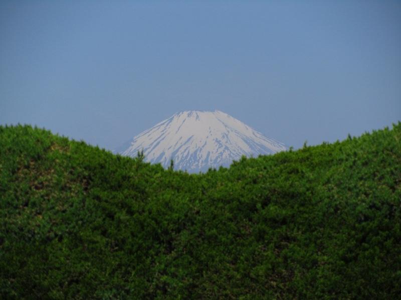 富士山 木