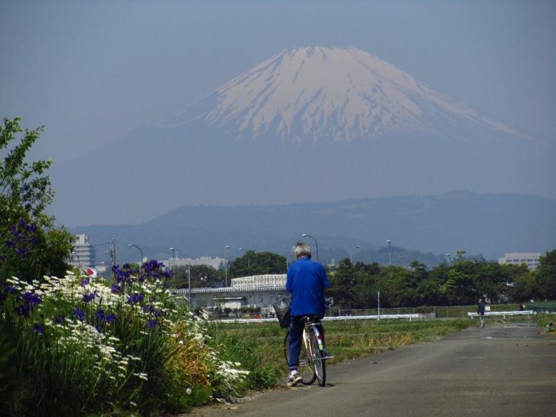 富士山 マーガレット アヤメ