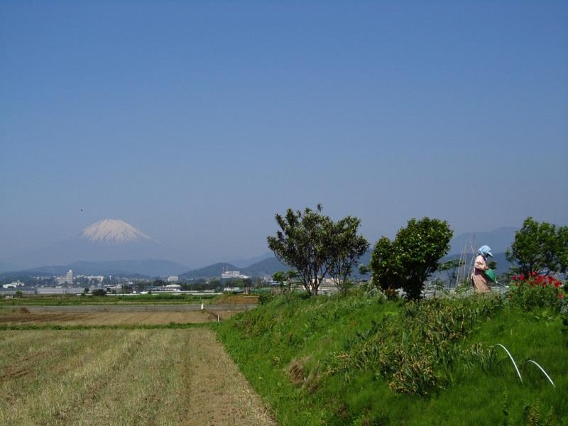 ⇒富士山 ポピー