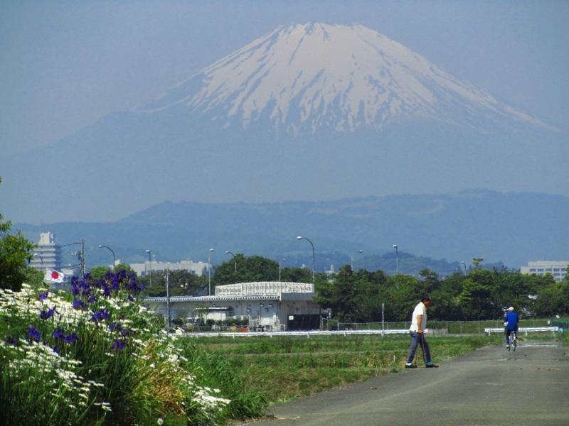 富士山 マーガレット 菖蒲