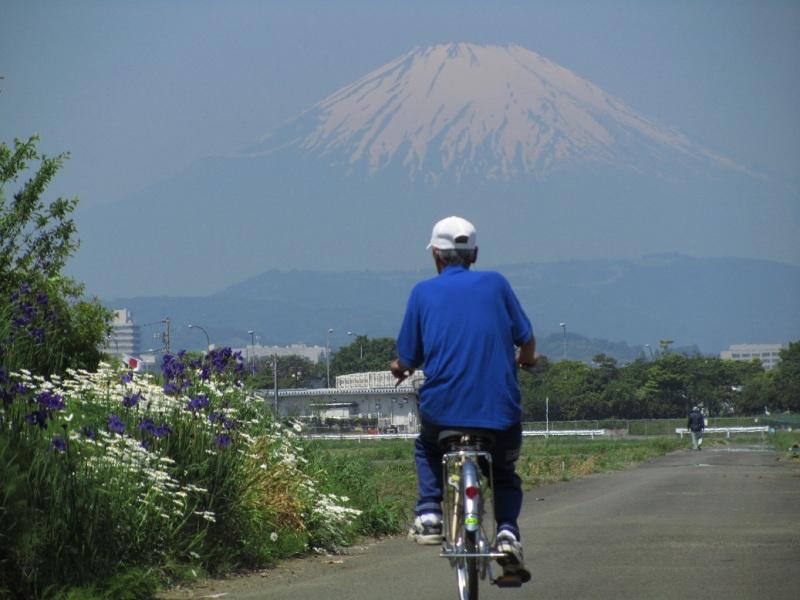 ⇒富士山 マーガレット