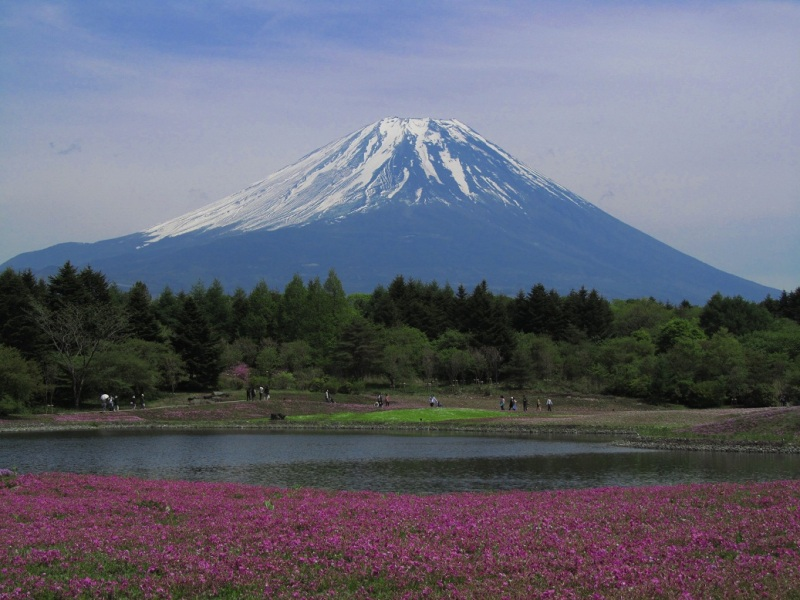 富士芝桜まつり2011開花状況まばらで入園料無料情報の写真 池画像