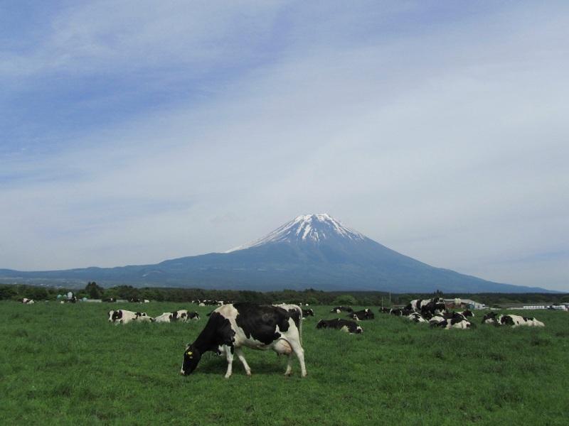 富士山 牛