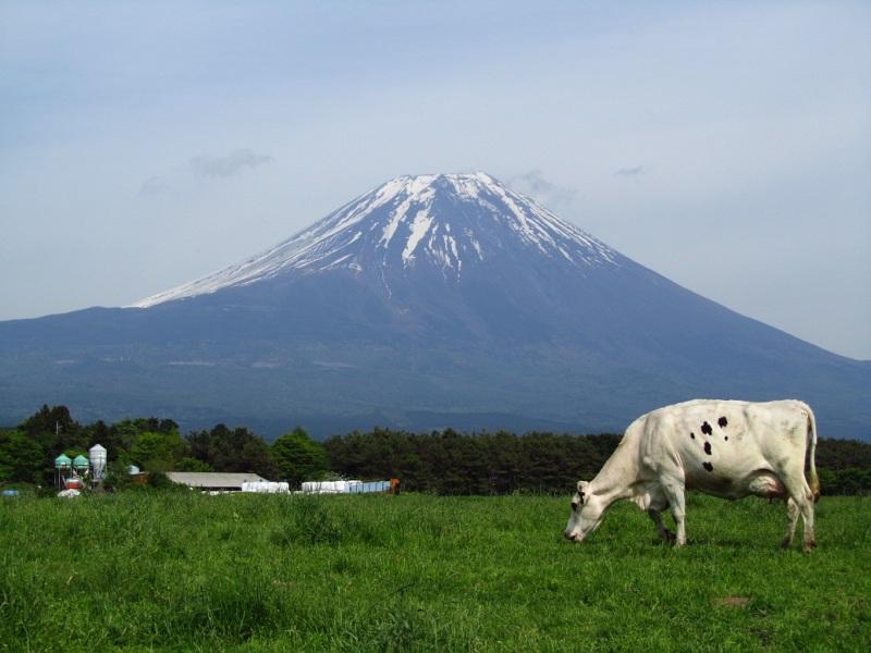 牛 富士山 あさぎり高原