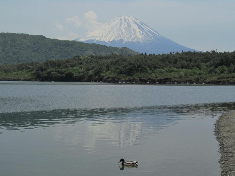 西湖逆さ富士