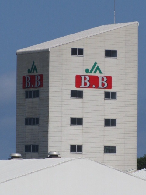 B.B画像