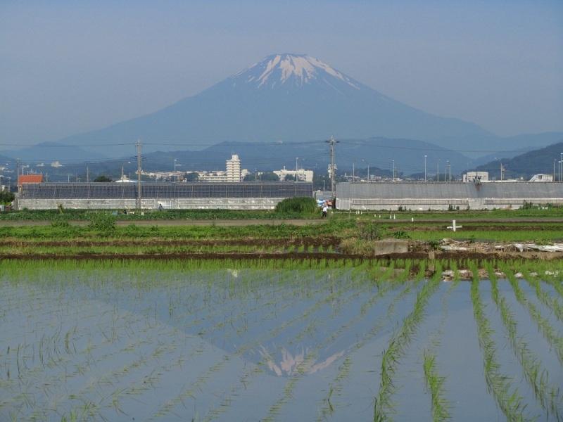 水田逆さ富士