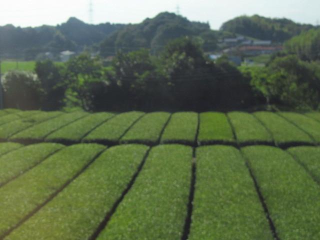 ⇒菊川市 茶畑