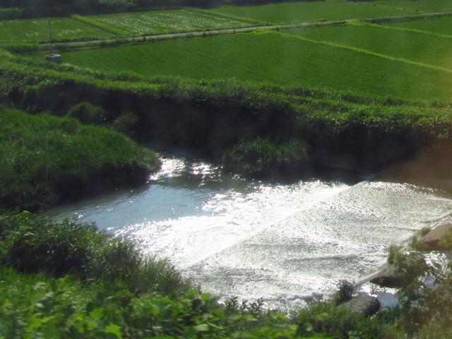 ⇒茶畑 菊川