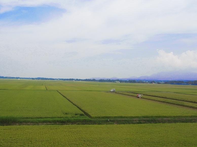 稲刈り 田んぼ