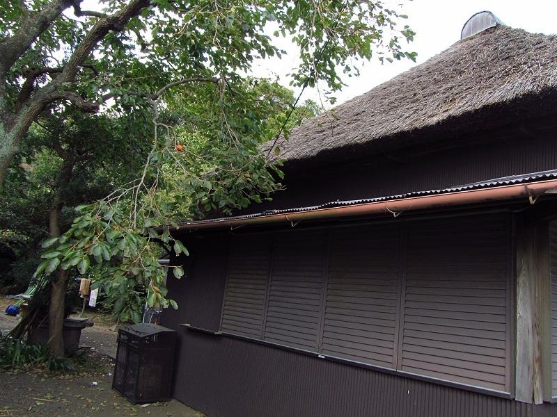 ⇒茅葺屋根の家 神奈川県大磯町高麗 画像 (国道1号 東海道
