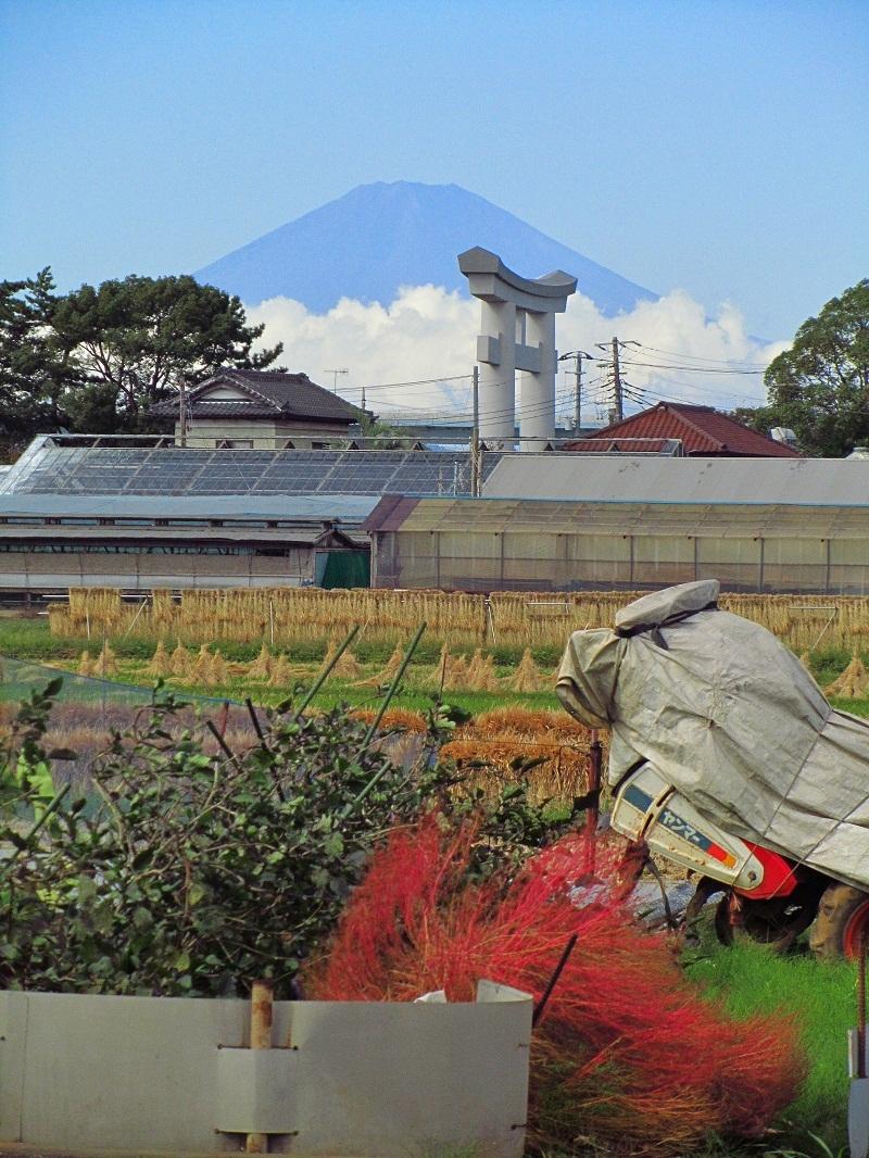 コキア富士山